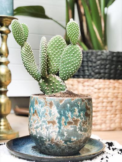 inspiratie door planten